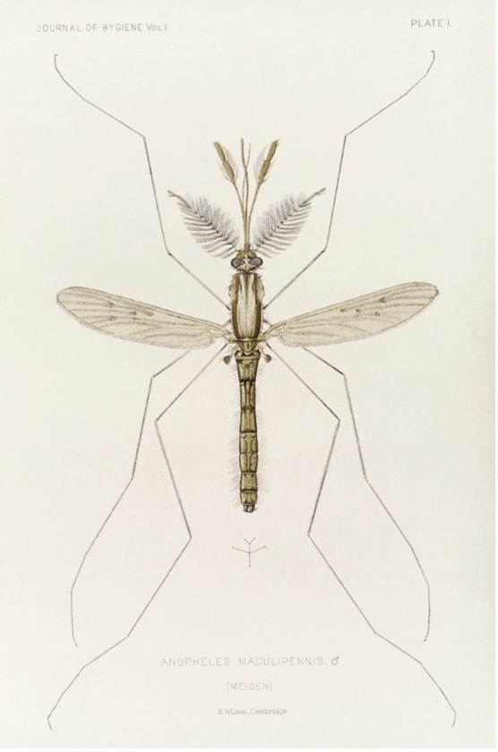 Je bekijkt nu Malaria